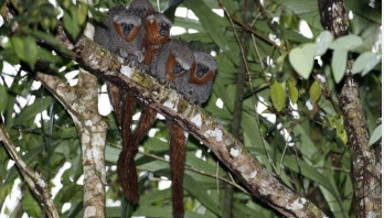 Nearly 381 new species discovered in Amazon