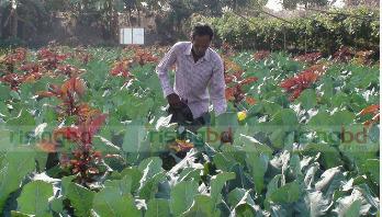 ব্রোকলি চাষে লাভবান গোপালগঞ্জের কৃষক