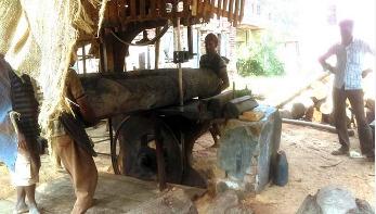 পাবনায় অনুমোদনহীন করাত কলের ছড়াছড়ি