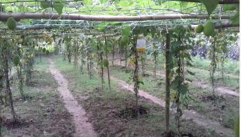 কাকরোলের গ্রাম
