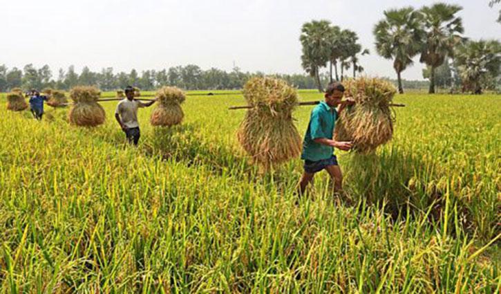 'কৃষি ব্যবস্থাপনা প্রযুক্তিগত উন্নয়নে জোর দিতে হবে'