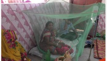 34 dengue patients undergoing treatment in Jhenaidah