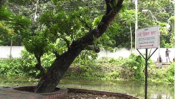 বঙ্গবন্ধুর স্মৃতিময় বাঘিয়ার খাল-হিজল গাছ