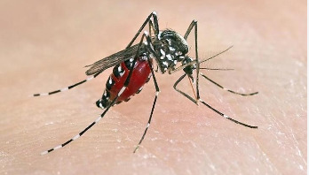192 infected with dengue fever in Jashore