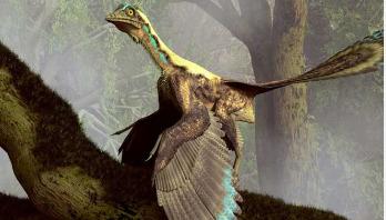 ডাইনোসরের ডানায় উকুন!