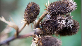 The best plants for attracting insects to gardens