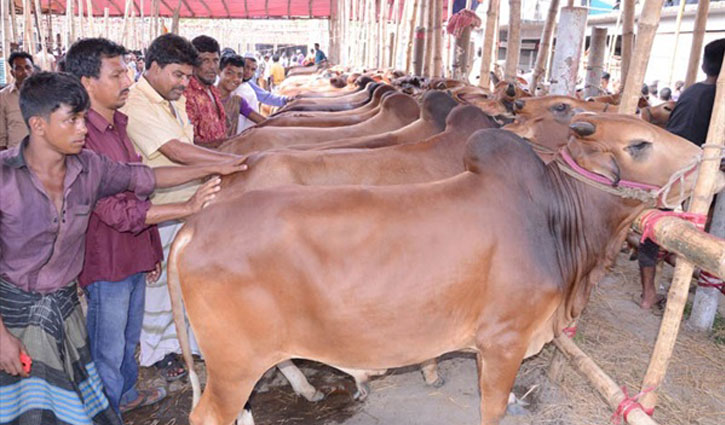 Indian restriction gives a boost to cattle rearing locally
