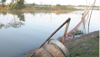'ভরজাল' এর ফাঁদে বিপন্ন দেশি মাছ