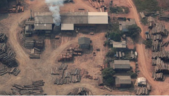 World losing battle against deforestation