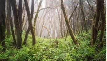 Alarming extinction threat to Europe's trees