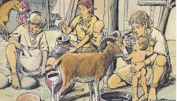 Prehistoric babies fed animal milk in bottles