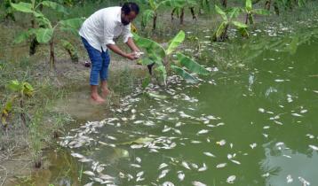 বরিশালে বিষ প্রয়োগে মাছ নিধনের অভিযোগ