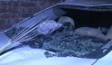 পৌরসভা নির্বাচন: রূপগঞ্জে সংঘর্ষে আহত ৩০, গাড়িতে অগ্নিসংযোগ