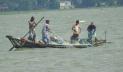 নিষিদ্ধ সময়ে বেপরোয়া মুন্সীগঞ্জের মা ইলিশ শিকারিরা