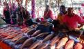জয়পুরহাটে নবান্ন উৎসব ঘিরে মাছের মেলা