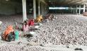 হিমাগারে আলুর দাম কম, বাজারে ঊর্ধ্বমুখী