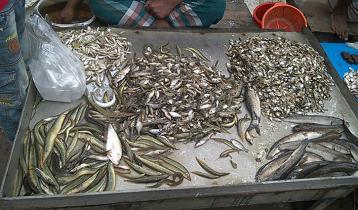 কুড়িগ্রামের হাট-বাজারে দেশি মাছের সমারোহ