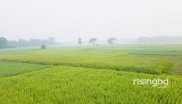 ভোরের শিশিরে হেমন্তের ডাক