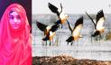 বিপন্ন পরিবেশ: নিরুপায় পরিযায়ী পাখি