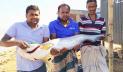 পদ্মা নদীতে জেলের জালে ১২ কেজির বোয়াল