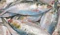 ইলিশ শিকারের দায়ে ১৩০ জেলের জেল-জরিমানা