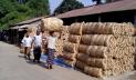 পাটের মণ ৪০০০ টাকা, লাভবান হচ্ছেন ফড়িয়া-ব্যবসায়ীরা