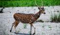 সুন্দরবনে হরিণের মাংসে ভুরিভোজ: কর্মকর্তা বরখাস্ত