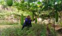 বিষমুক্ত সবজি চাষ করে চমকে দিয়েছে পুলিশ