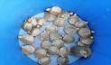 সাফারি পার্কের অ্যাকুরিয়ামে নতুন আরও ৩৫০ কচ্ছপ
