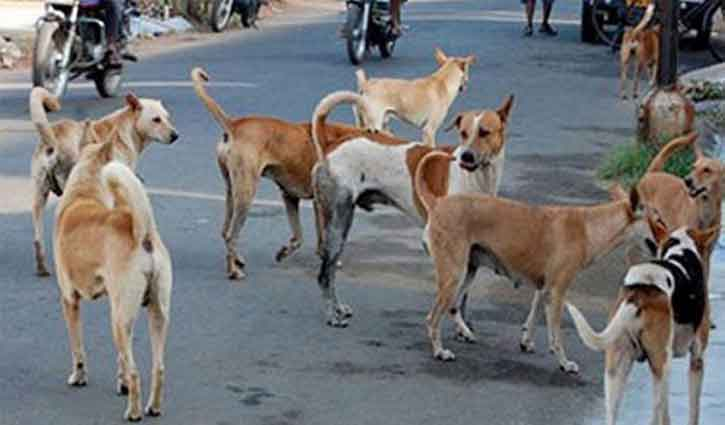 Environmentalists advise sterilization to control dog population