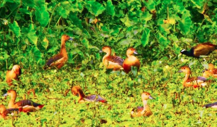 IU abuzz with migratory birds