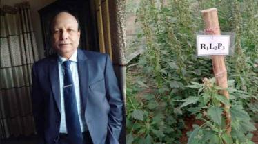 SAU teacher develops new crop variety 'SAU Quinoa-1'