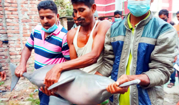 3 fined for catching dolphin in Manikganj