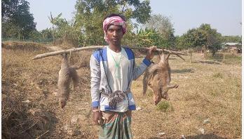 চাঁপাইনবাবগঞ্জে আদিবাসীদের শিকারে বিলুপ্ত হচ্ছে বেজি