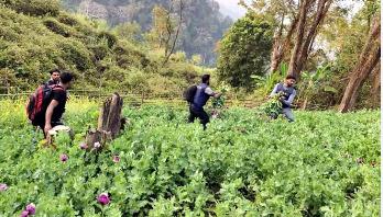 RAB destroys 4 poppy fields in Keokradong