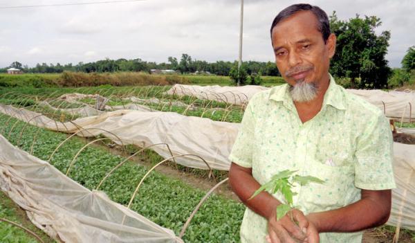 শীতকালীন আগাম সবজির নার্সারি: উপকৃত হাজারো কৃষক