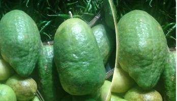 জারা লেবুর হালি ২০০ টাকা, করোনায় প্রবাসী ক্রেতা কম