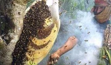 করোনা পরিস্থিতিতে সুন্দরবনে বেড়েছে মধুর উৎপাদন