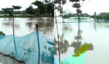 সুনামগঞ্জে বন্যায় ভেসে গেছে ৫৩ কোটি টাকার মাছ