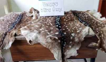 Deer skins recovered in Barguna