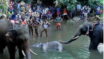 One arrested for allegedly killing pregnant elephant