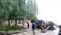 ঢেউয়ের ধাক্কায় বিধ্বস্ত কক্সবাজারের ঝাউবন