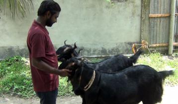 তালি দিলে খাবার খায় 'মেসি' ও 'নেইমার'