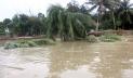 পদ্মার পানি বাড়ছে, ফরিদপুরে নতুন নতুন এলাকা প্লাবিত