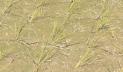 দক্ষিণাঞ্চলে বৃষ্টি-বন্যা, উত্তরাঞ্চলে পানির অভাবে ধান রোপণ ব্যাহত