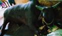 ৮ লাখ টাকার ২৭ মণের 'কালো মানিক' মারা গেছে