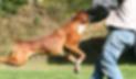 পাগলা কুকুরের কামড়ে ছেলের মৃত্যু, শোকে মায়ের আত্মহত্যা