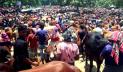 বাড়তি লাভের আশায় গরু নিয়ে ঢাকায় ছুটছেন ব্যবসায়ীরা