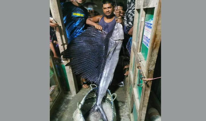 মেঘনায় ধরা পড়লো ২২ কেজির 'পাখি মাছ'