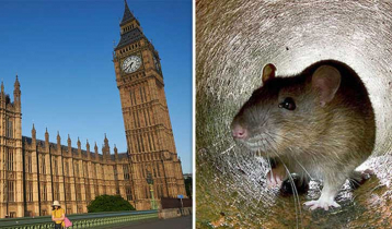 Andalusia's parliament proceedings disrupted by rodent